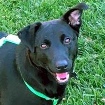Timmy  ADOPTION PENDING #201107: Male Dog